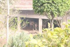 Коровник